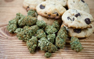 How strong is your cannabis-infused edible?